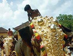 Decorated Elephant during Festivals