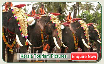 Kerala Elephants