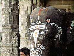 Decorated Temple Elephant