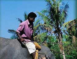 Working  Elephant - Kerala